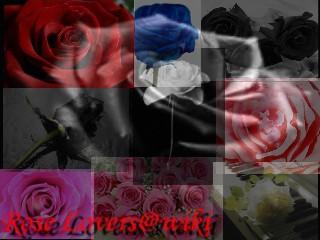 <img:http://www.elfpack.com/img/photo/7187_1121109373.jpg>