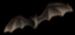 <img:http://www.elfpack.com/stuff/Bat.png>