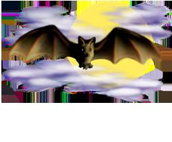 <img:http://www.elfpack.com/stuff/Bat_center_nightskyMED.png>