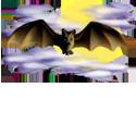 <img:http://www.elfpack.com/stuff/Bat_center_nightskySM.png>