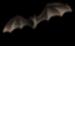 <img:http://www.elfpack.com/stuff/Bat_high.png>