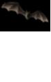 <img:http://www.elfpack.com/stuff/Bat_high_rev.png>