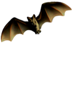 <img:http://www.elfpack.com/stuff/Bat_left-tiltMED.png>