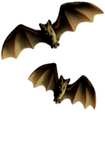 <img:http://www.elfpack.com/stuff/Bats-2leftNrightMED.png>