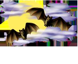 <img:http://www.elfpack.com/stuff/Bats-2leftNright_nightskyMed_rev.png>