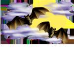 <img:http://www.elfpack.com/stuff/Bats-2leftNright_nightskySM.png>