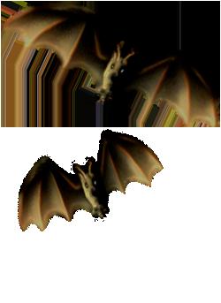 <img:http://www.elfpack.com/stuff/Bats-2leftNright_rev.png>