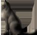 <img:http://www.elfpack.com/stuff/CatSat_leftSM.png>