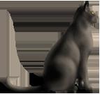 <img:http://www.elfpack.com/stuff/CatSat_right.png>