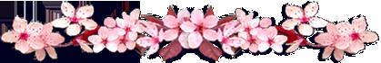 <img:http://www.elfpack.com/stuff/CherryBlossomsDivLg.png>
