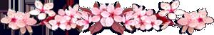 <img:http://www.elfpack.com/stuff/CherryBlossomsDivSM.png>