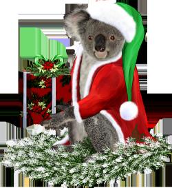 <img250*0:http://www.elfpack.com/stuff/ChristmasKoalaByArtsieladie2013rev.png>