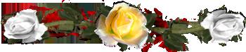 <img:http://www.elfpack.com/stuff/DividerRosesYel-White.png>