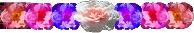 <img:http://www.elfpack.com/stuff/FlowerVarDivLg.png>
