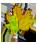 <img:http://www.elfpack.com/stuff/Leaf-GrnOrYel.png>