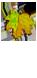 <img:http://www.elfpack.com/stuff/Leaf-GrnOrYel_MedH.png>