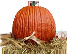 <img:http://www.elfpack.com/stuff/Pumpkin-real!.png>