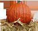 <img:http://www.elfpack.com/stuff/Pumpkin-realX-SM.png>