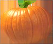 <img:http://www.elfpack.com/stuff/PumpkinPatch_1Med.png>