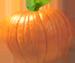 <img:http://www.elfpack.com/stuff/PumpkinPatch_1SM.png>