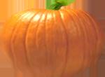 <img:http://www.elfpack.com/stuff/PumpkinPatch_3Med.png>