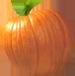 <img:http://www.elfpack.com/stuff/PumpkinPatch_4SM.png>