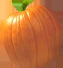 <img:http://www.elfpack.com/stuff/PumpkinPatch_5Med.png>