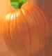 <img:http://www.elfpack.com/stuff/PumpkinPatch_5SM.png>