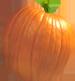 <img:http://www.elfpack.com/stuff/PumpkinPatch_6SM.png>