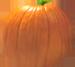 <img:http://www.elfpack.com/stuff/PumpkinPatch_9SM.png>
