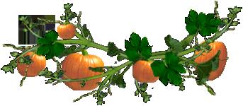 <img:http://www.elfpack.com/stuff/PumpkinVineDiv_5pum_rev.png>
