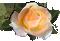 <img:http://www.elfpack.com/stuff/RoseBulletOrPeach.png>