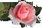 <img:http://www.elfpack.com/stuff/RoseBulletPeach.png>