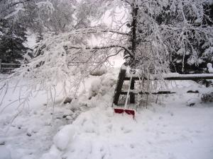 <img300*0:http://www.elfpack.com/stuff/Snowy_Entry.jpg>