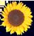 <img:http://www.elfpack.com/stuff/SunFlwrBullet.png>