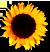 <img:http://www.elfpack.com/stuff/SunFlwrBullet2.png>