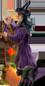 <img:http://www.elfpack.com/stuff/Witch_n_BroomCatPumpkin40.png>