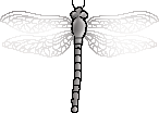 <img:stuff/aj/2605/dragonfly7.png>