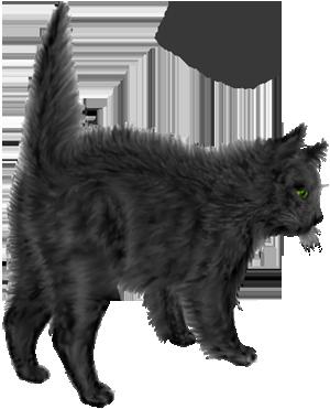 <img:http://www.elfpack.com/stuff/blackcat_scared.png>
