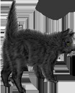 <img:http://www.elfpack.com/stuff/blackcat_scaredSM.png>