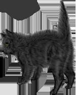 <img:http://www.elfpack.com/stuff/blackcat_scaredSM_rev.png>