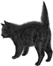 <img:http://www.elfpack.com/stuff/blackcat_scaredX-SM_rev.png>