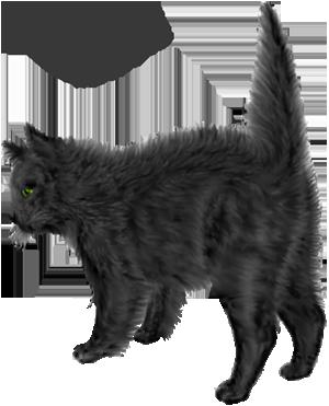 <img:http://www.elfpack.com/stuff/blackcat_scared_rev.png>